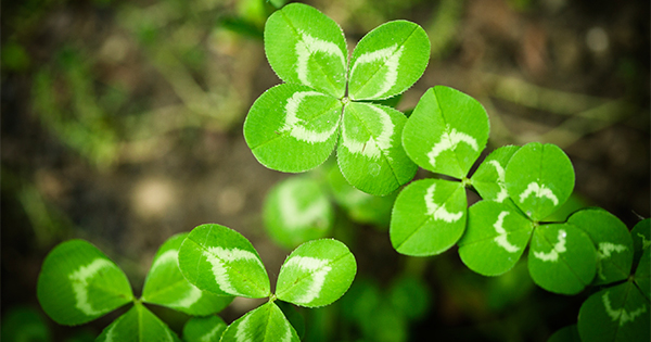 Things To Do For St. Patrick's Day in Cincinnati 2016